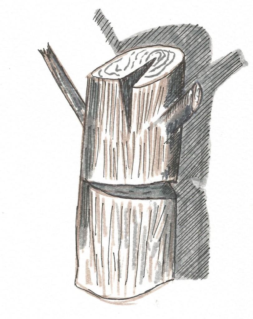 Tronco. Tinta papel. 20 x 14 cm. 2009.